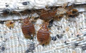 A Greener Approach to Bed Bugs