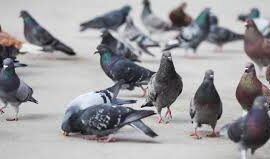 Preventing Invasive Birds from Roosting At Your Facility