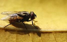Fly Prevention and Management for Commercial Properties