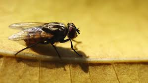 Large Flies, Small Flies – Get the Facts