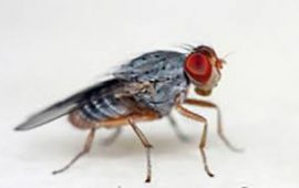 Knowing Your Flies