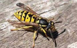 Keep Stinging Insects Out of Commercial Properties